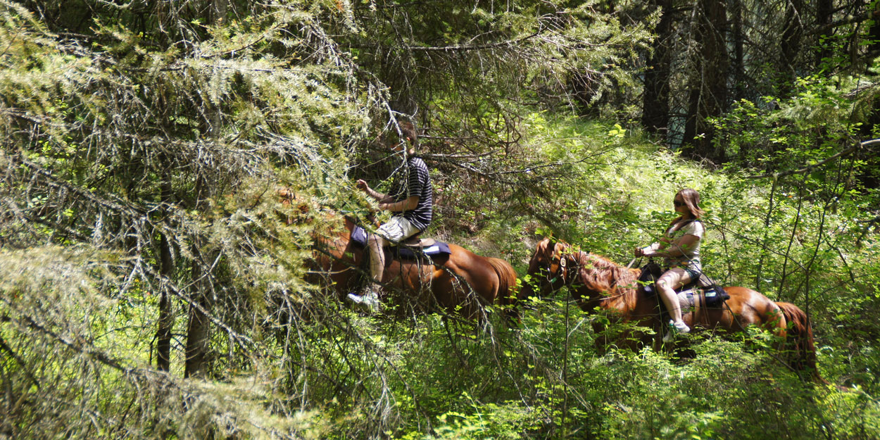 Okanagan trail rides for all levels, with easy access from Kelowna, Vernon and Lake Country